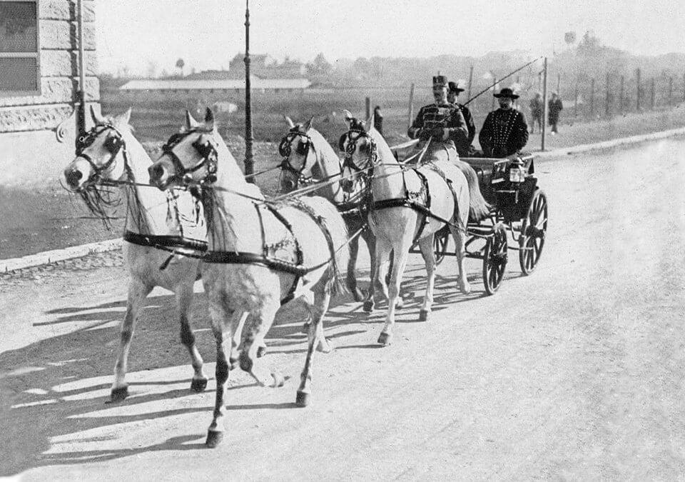 """2. ábra Pettkó-Szandtner Tibor""""légies járású, egységes küllemű, jó természetű"""" lovai testvérek voltak."""